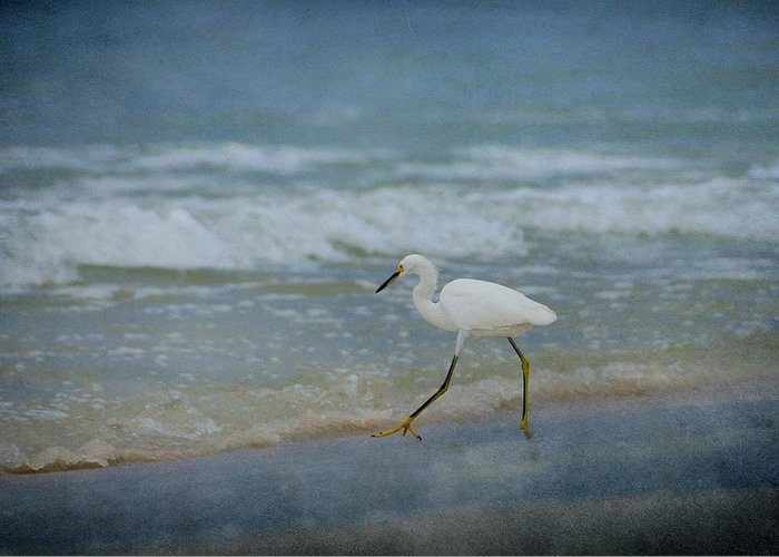 Bird Greeting Card featuring the photograph Egret by Sandy Keeton