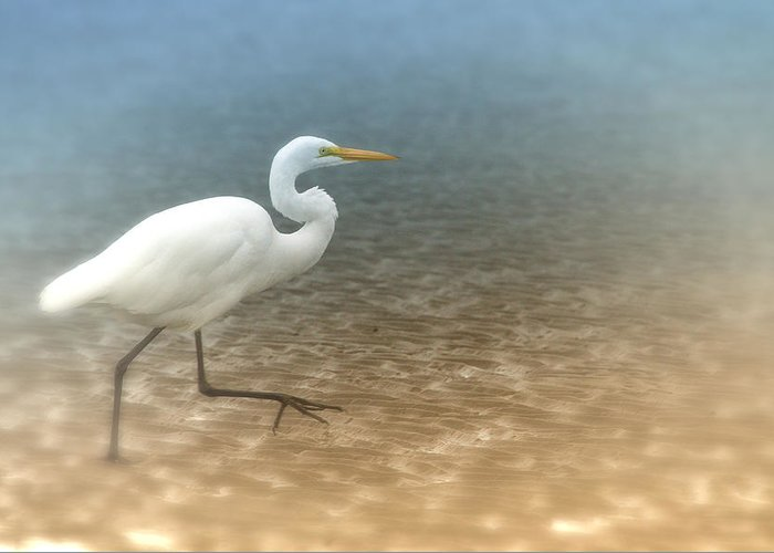 Egret Greeting Card featuring the photograph Egret Stroll by Karol Livote