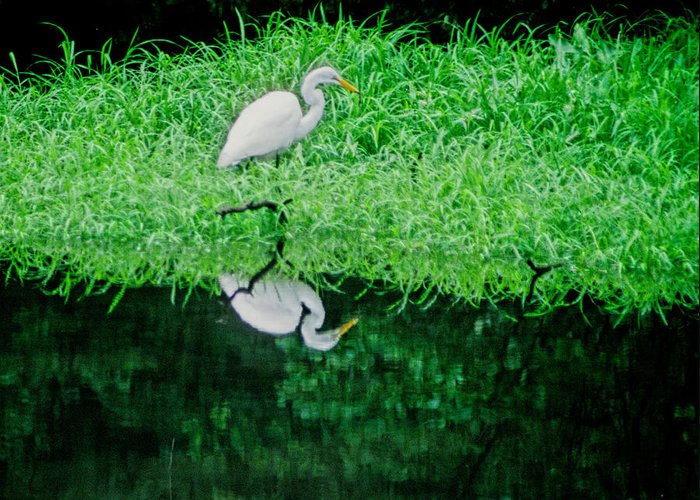 Egret Greeting Card featuring the photograph Egret Wading by Carolyn Smith