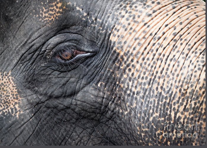 African Greeting Card featuring the photograph Elephant Close-up Portrait by Johan Larson