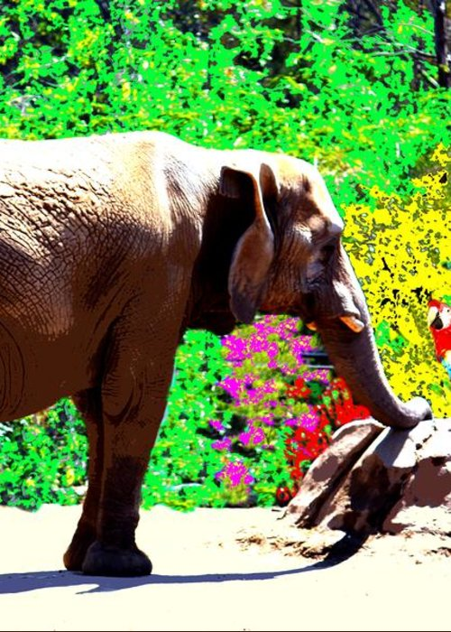 Elephant Greeting Card featuring the photograph Elephant-parrot Dialogue by Rom Galicia