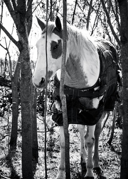 Horse Greeting Card featuring the photograph Elusive by Toni Hopper