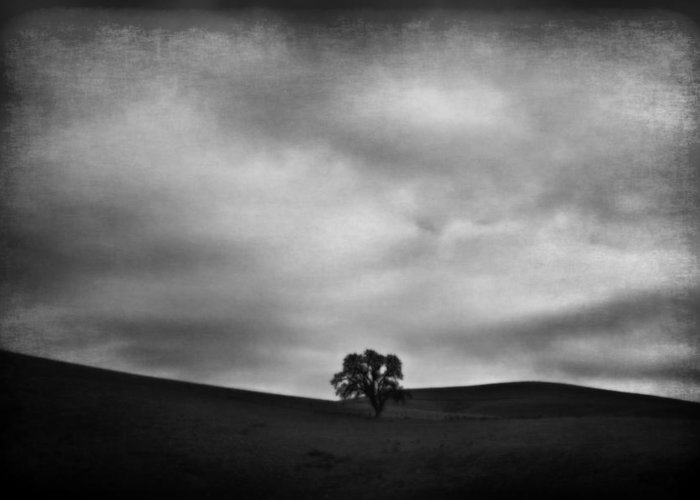 Landscape Greeting Card featuring the photograph Emptiness by Laurie Search