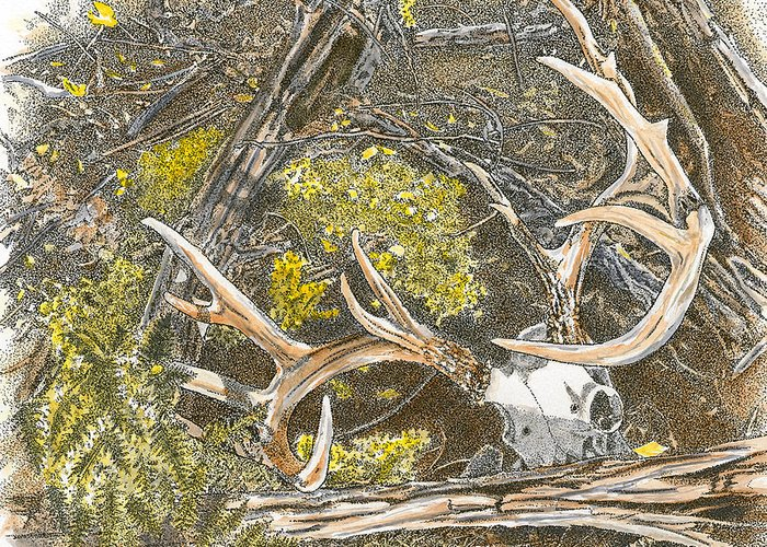 Antlers Greeting Card featuring the drawing End Of The Trail by Kenneth or Susan Posselt