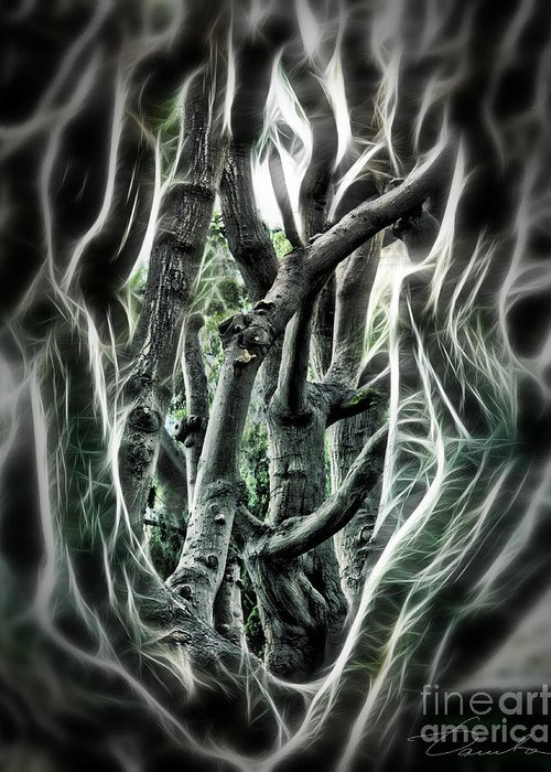 Entangled Greeting Card featuring the photograph Entangled Worlds by Danuta Bennett