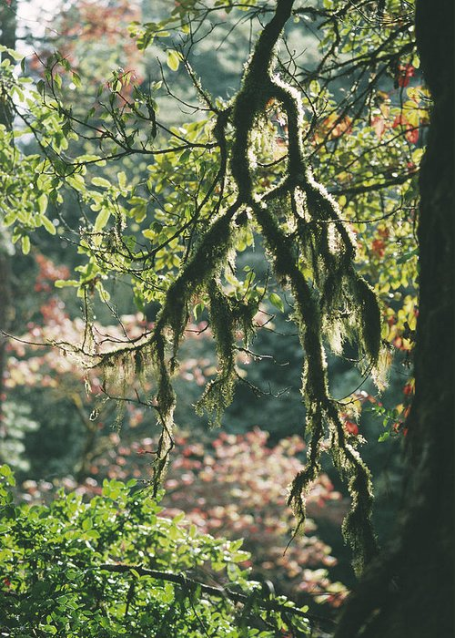 Epiphytic Greeting Card featuring the photograph Epiphytic Moss by Doug Allan