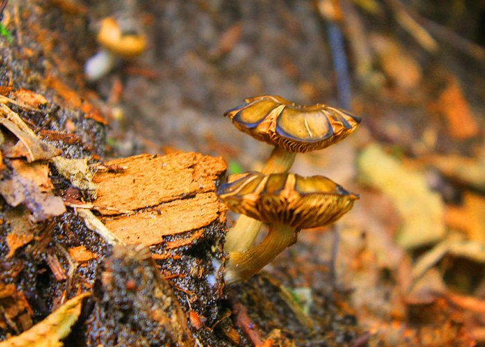 Mushrooms Greeting Card featuring the photograph Epworth Mushrooms by Pat LeBoeuf