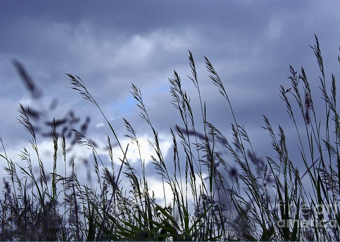 Grass Greeting Card featuring the photograph Evening Grass by Elena Elisseeva
