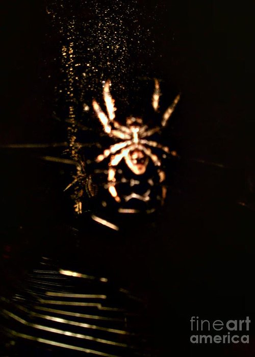 Spider Greeting Card featuring the photograph Evil Charlotte by Jayme X