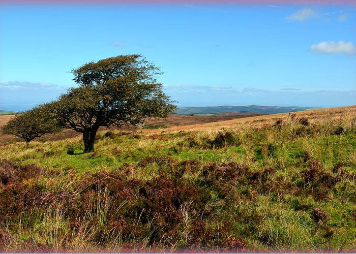Heather Greeting Card featuring the photograph Exmoor's Heather-covered Hills by Carla Parris