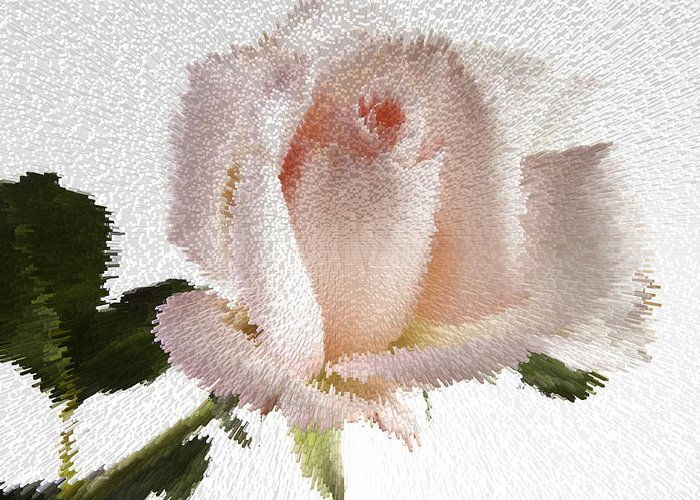 Rose Greeting Card featuring the photograph Exploding Pink Rose by M K Miller