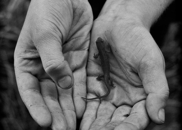 Hands Greeting Card featuring the photograph Explorer's Hands by Nathan Larson