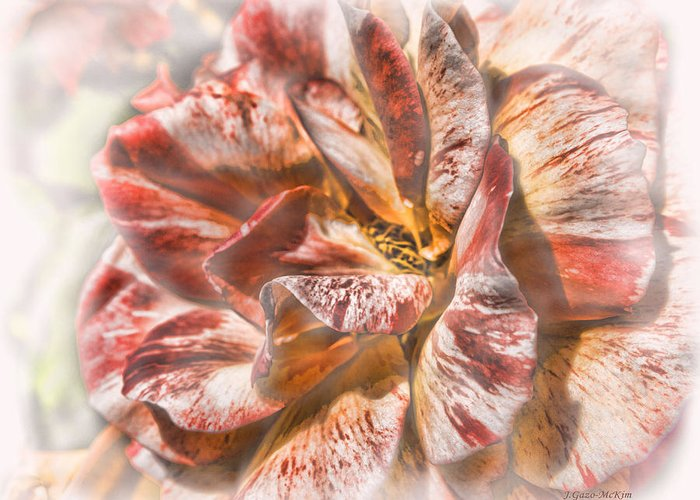 Flower Greeting Card featuring the photograph Faded Glory by Jo-Anne Gazo-McKim