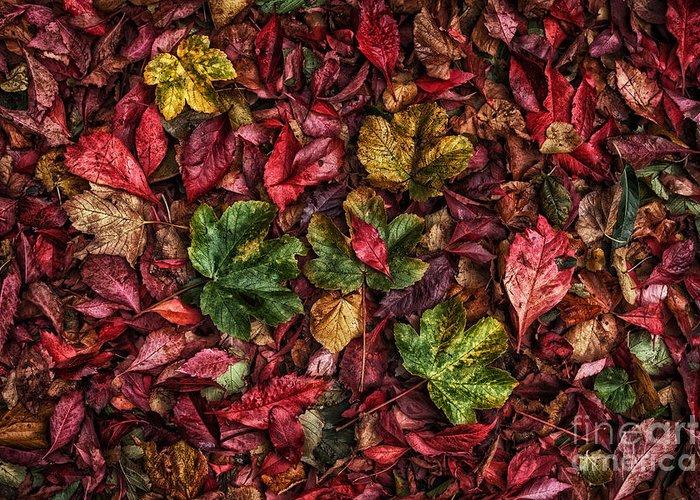 Autumn Greeting Card featuring the photograph Fall Autumn Leaves by John Farnan