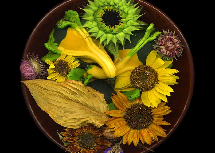 Sunflower Greeting Card featuring the photograph Fall Colors by J Arthur Davis
