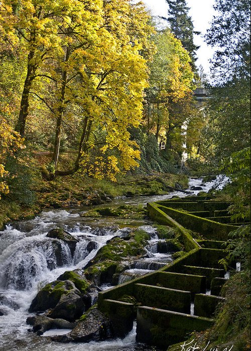 Tumwater Falls Washington Fall Leaves Maples Greeting Card featuring the photograph Fall Fish Ladder by Kate Lynch