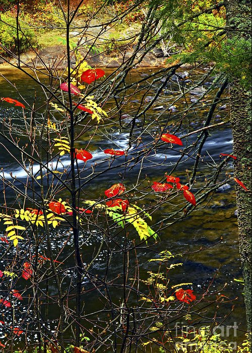 Autumn Greeting Card featuring the photograph Fall Forest And River by Elena Elisseeva