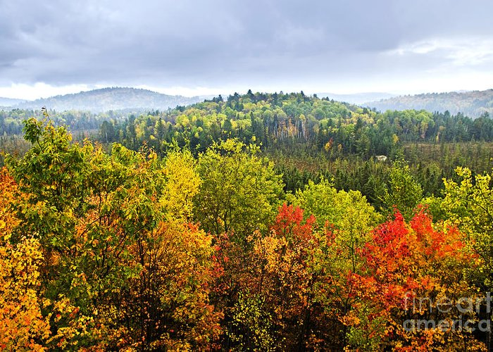 Autumn Greeting Card featuring the photograph Fall Forest by Elena Elisseeva