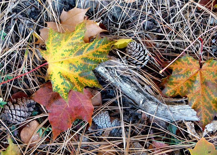 Fall Forest Floor Greeting Card featuring the photograph Fall Forest Floor by Will Borden