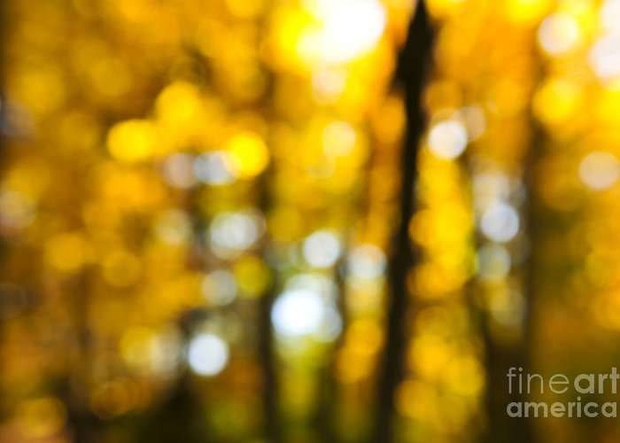 Nature Greeting Card featuring the photograph Fall Forest In Sunshine by Elena Elisseeva
