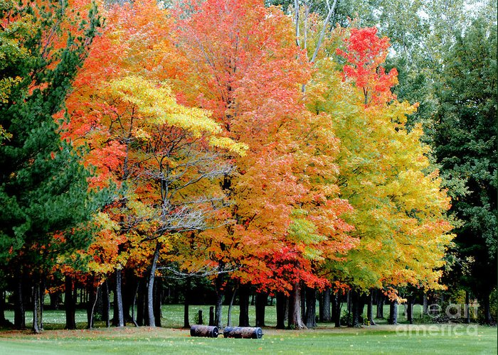 Autumn Colors Greeting Card featuring the photograph Fall In Michigan by Optical Playground By MP Ray
