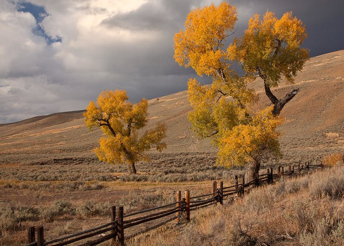 Yellowstone National Park Greeting Card featuring the photograph Fall In Yellowstone by Nicholas Palmieri
