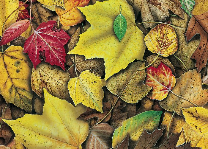 Jon Q Wright Greeting Card featuring the painting Fall Leaf Study by JQ Licensing