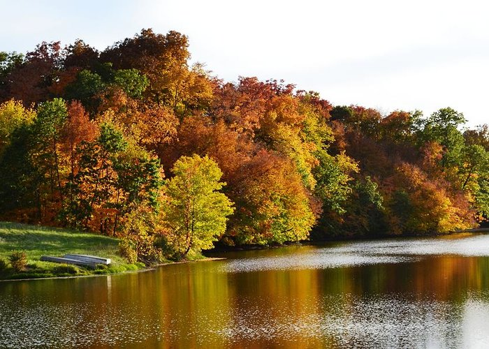 Gahn Wildlife Refuge Pond Greeting Card featuring the photograph Fall On The Pond by Kim Hymes