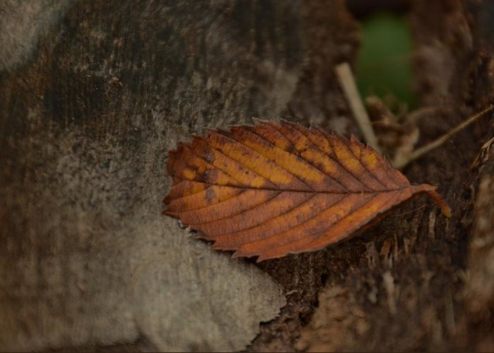 Fall Greeting Card featuring the photograph Fall Textures by Maria Suhr