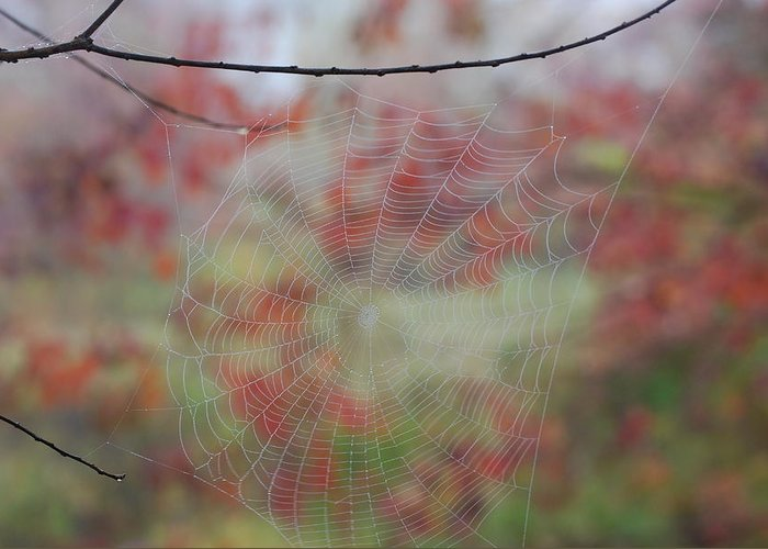 Fall Greeting Card featuring the photograph Fall Web by Beth Gates-Sully