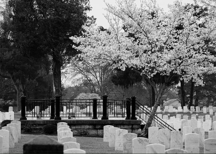 Cemetary Greeting Card featuring the photograph Fallen - Black And White by Paulette Thomas
