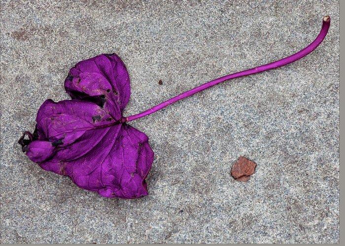 Fallen Purple Leaf Greeting Card featuring the photograph Fallen Purple Leaf by Robert Ullmann