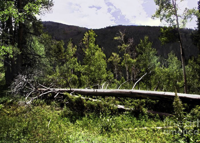 Trees Greeting Card featuring the photograph Fallen Tree by Madeline Ellis