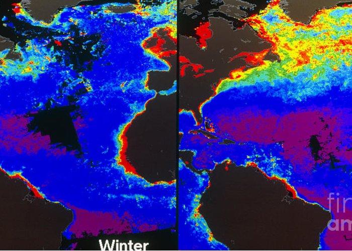 Algal Bloom Greeting Card featuring the False-colour Satellite Images by Dr. Gene Feldman, NASA Goddard Space Flight Center