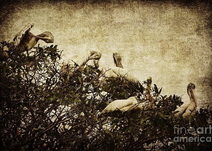 Pelican Greeting Card featuring the photograph Family Tree by Andrew Paranavitana
