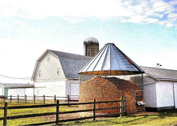 Farm Life Greeting Card featuring the photograph Farm Life by Todd Hostetter