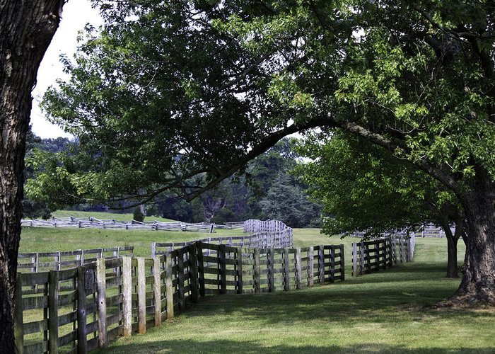 Appomattox Greeting Card featuring the photograph Farmland Shade Appomattox Virginia by Teresa Mucha