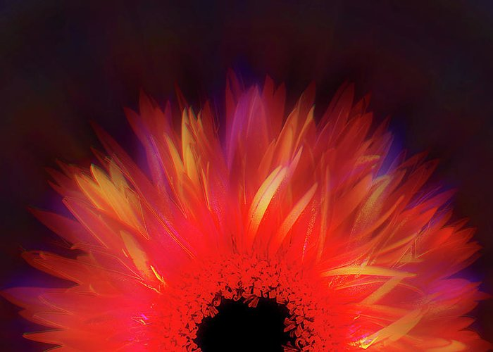 Avantgarde Greeting Card featuring the photograph Feathered Floral by Li  van Saathoff