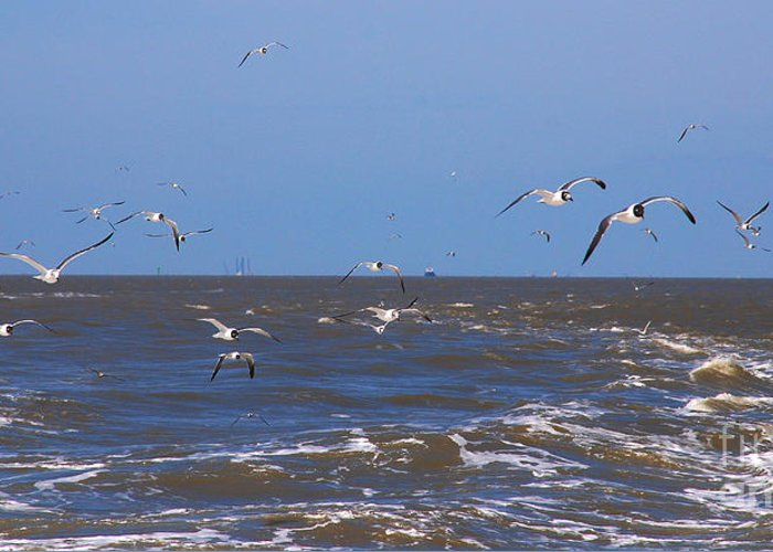 Seagulls Greeting Card featuring the photograph Feed Us - Ferry To Galveston Tx by Susanne Van Hulst