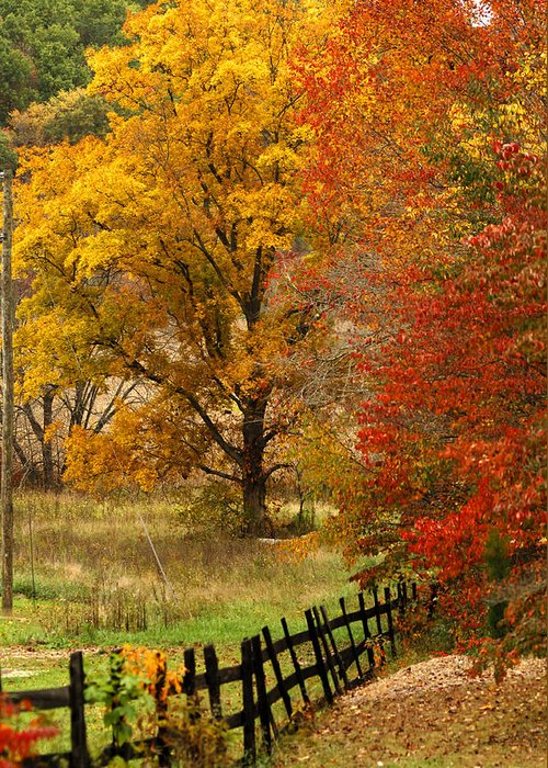 Black Fence Greeting Card featuring the photograph Fence In Autumn by Randall Branham