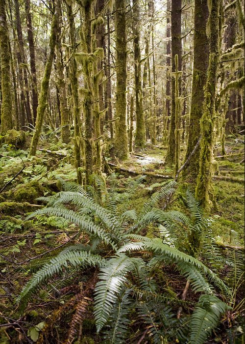 Queen Charlotte Islands Greeting Card featuring the photograph Ferns Sit On The Forest Floor by Taylor S. Kennedy