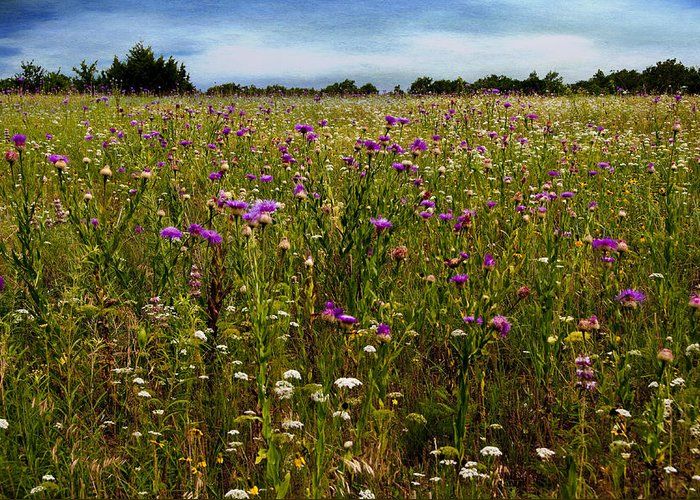Flowers Greeting Card featuring the photograph Field Of Thistles by Tamyra Ayles