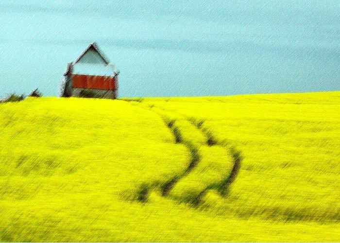 Field Greeting Card featuring the photograph Field Of Yellow by Aisha Karen Khan