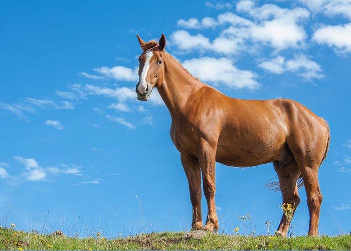 Red Dun Horse Greeting Cards