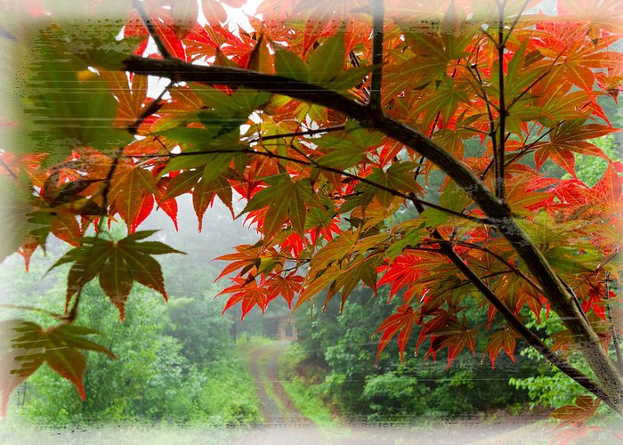 Appalachia Greeting Card featuring the photograph Fire Fog by Debra and Dave Vanderlaan
