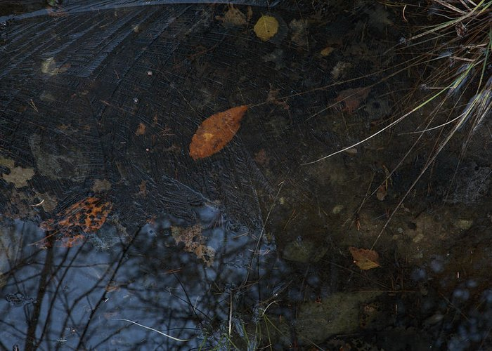 Autumn Greeting Card featuring the photograph First Ice by Ulrich Kunst And Bettina Scheidulin
