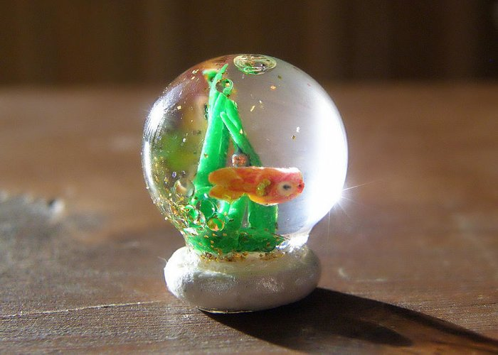 Miniature Snowglobe Canvas Prints Greeting Card featuring the sculpture Fish Globe by Wendy McKennon