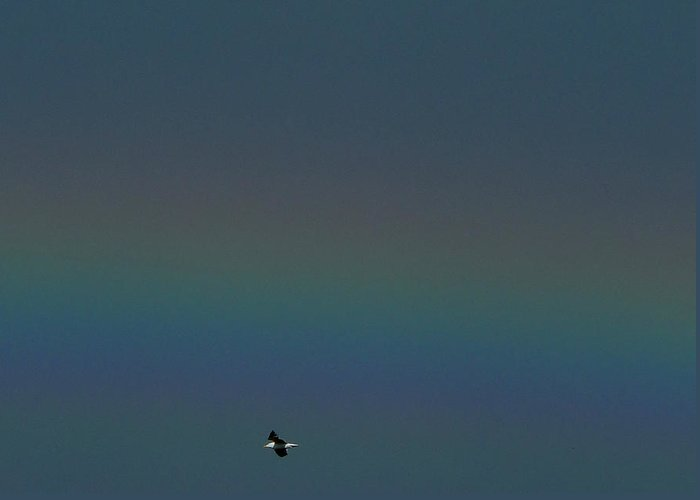 Fuzzy Rainbow And Gull Greeting Card featuring the photograph Flight Spectrum by Baato
