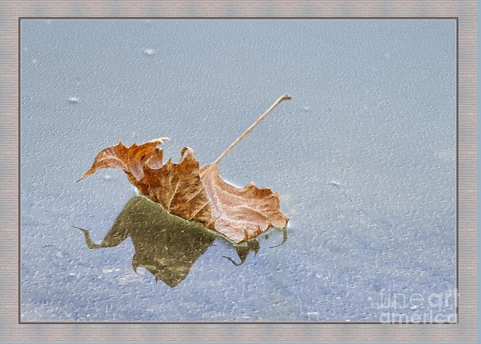 Leaf Greeting Card featuring the photograph Floating Down Lifes Path by Deborah Benoit