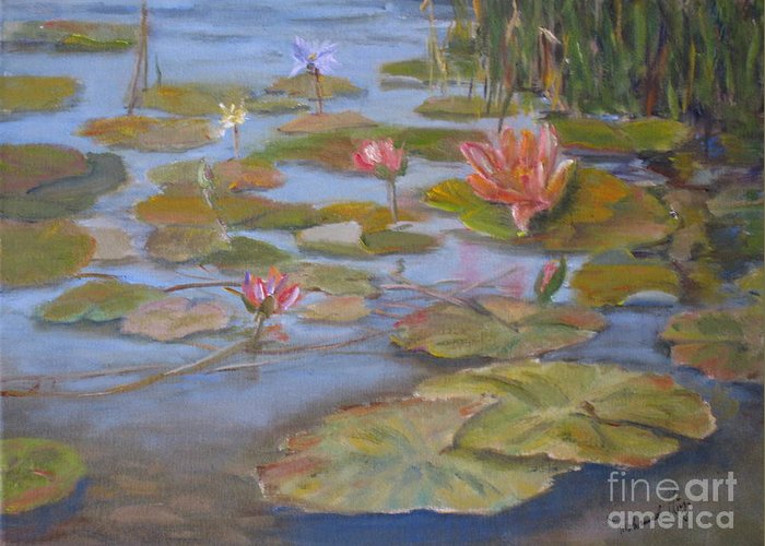 Lilly Pad Greeting Card featuring the painting Floating Lillies by Mohamed Hirji